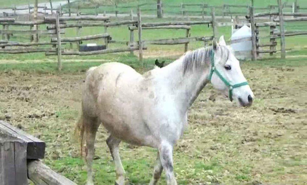 cavallo1Small